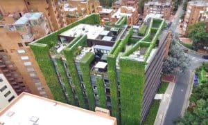 Santalaia קיר ירוק