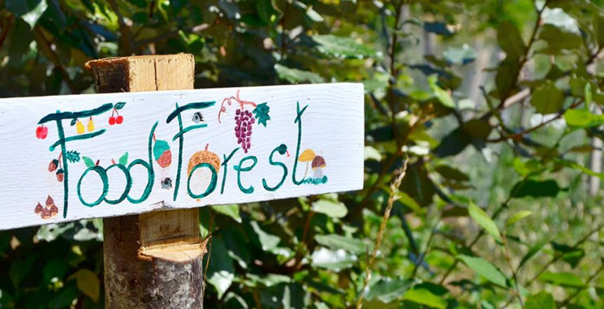 סימן כיוון יערות מאכל