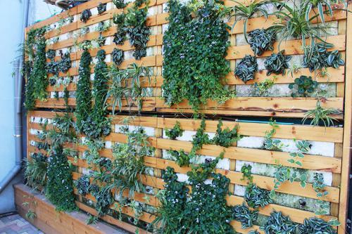 קירות ירוקים ופינות ישיבה טבעיות